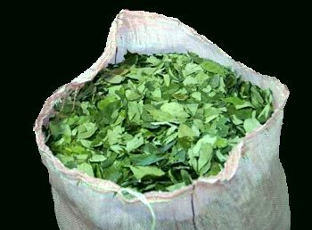 1kg Coca Leaves